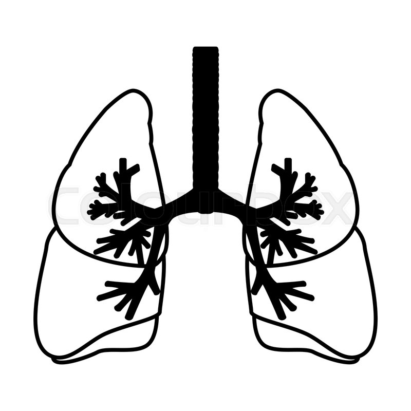 Human Lungs Anatomy Medical Science