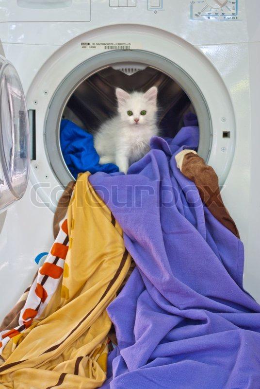 katze in der waschmaschine stockfoto colourbox. Black Bedroom Furniture Sets. Home Design Ideas