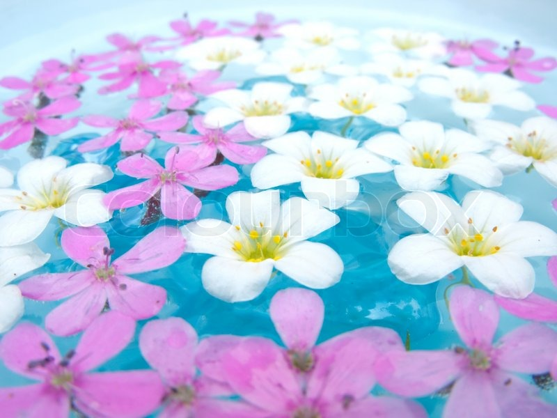 White and pink flowers floating on water stock photo for Floating flowers in water