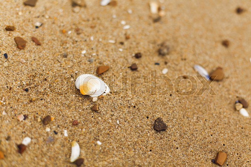 Seashell on sandy beach close up. White shells on shore near sea. Relaxing on tropical island. Let\'s go travel. Summer vacation concept. Copy space, stock photo