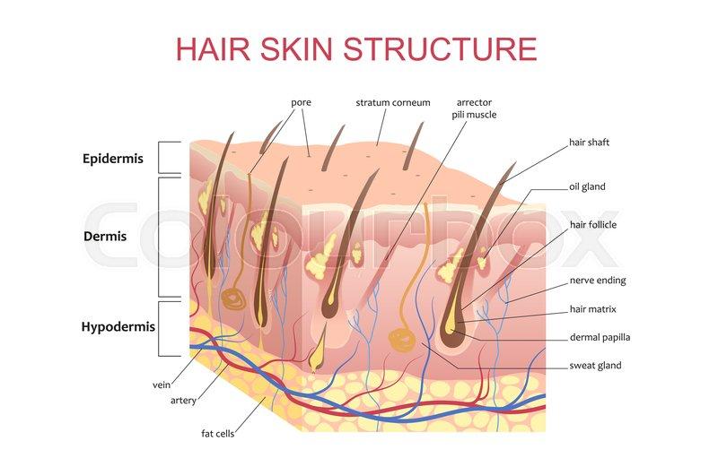 scalp diagram model wiring diagram img