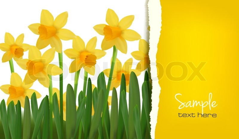 Narcissus And Daffodil Spring Flower Stock Vector Colourbox