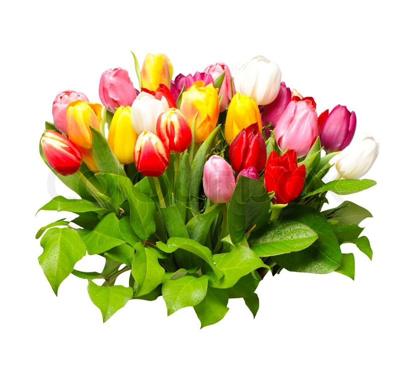bouquet of fresh assorted tulip flowers  stock photo  colourbox, Beautiful flower