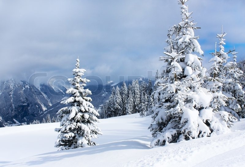 Stock image of 'Winter trees in alp mountains'
