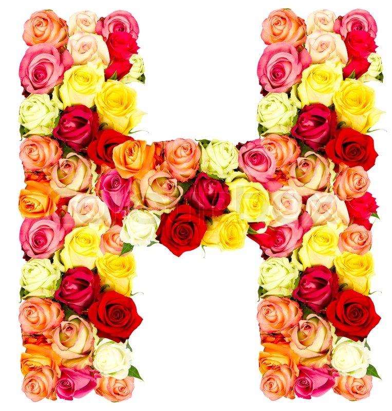 H, roses flower alphabet | Stock Photo | Colourbox