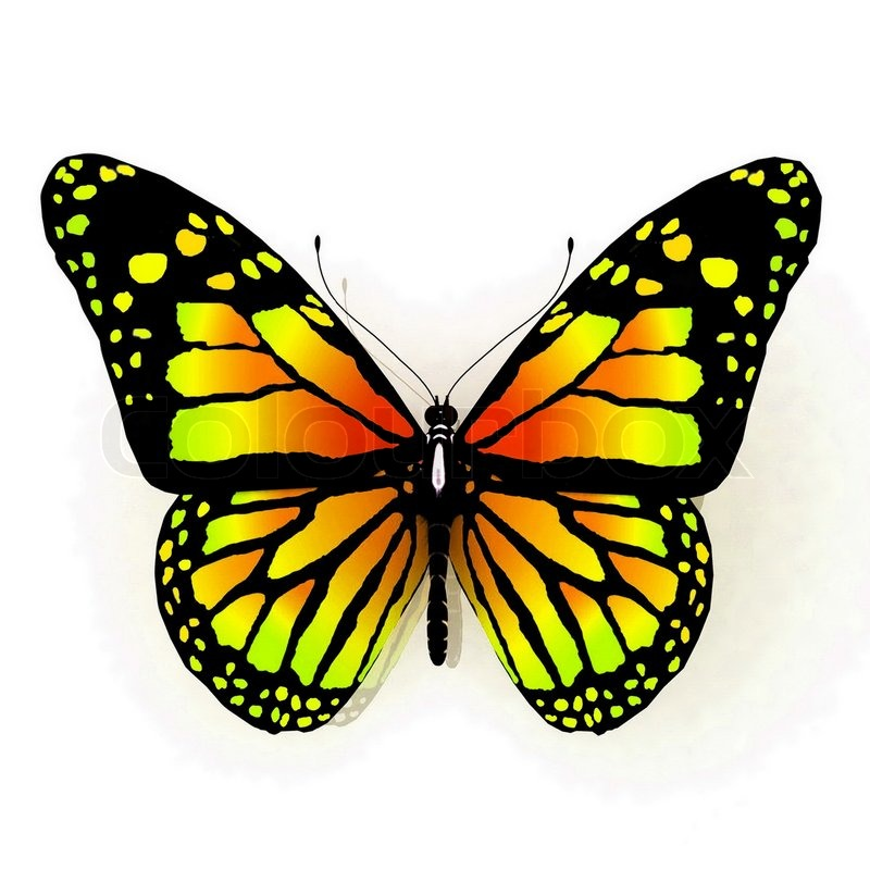 butterfly on yellow color -#main