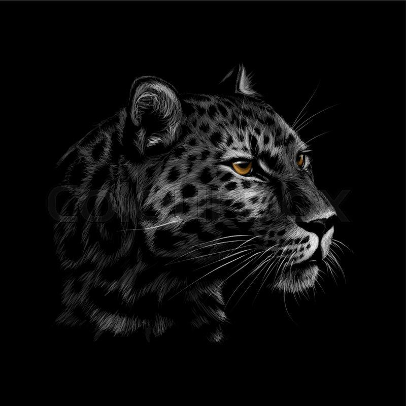 6cd373c35 Portrait of a leopard head on a black ...   Stock vector   Colourbox