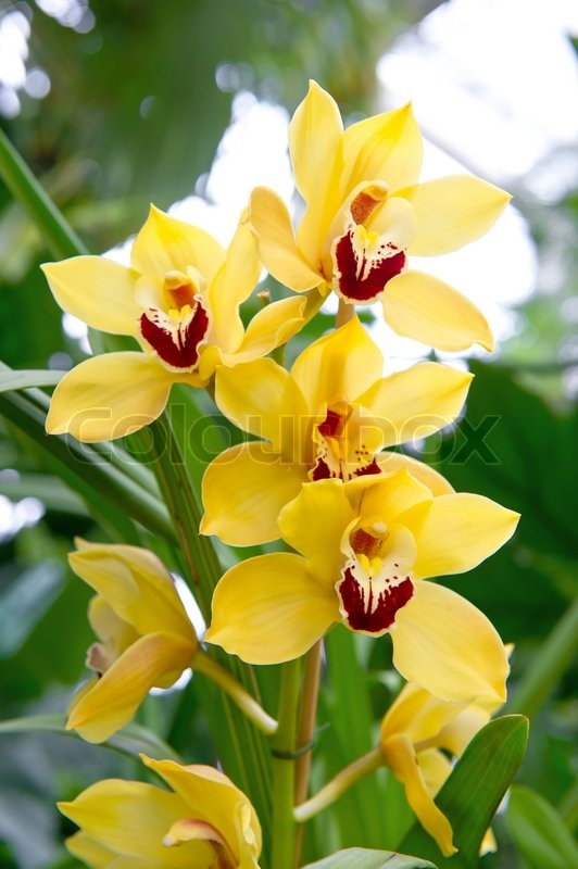 Exotic orchid flower with green tropical plants stock photo exotic orchid flower with green tropical plants stock photo colourbox mightylinksfo