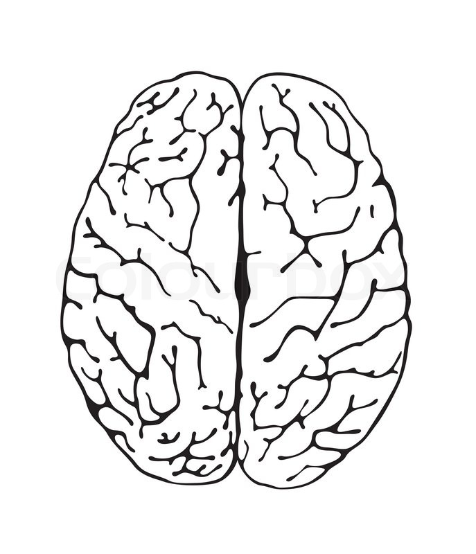 brain line drawing top - photo #14