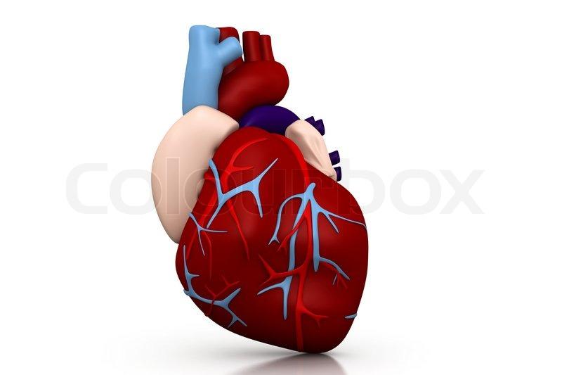 Menschliches Herz   Stockfoto   Colourbox