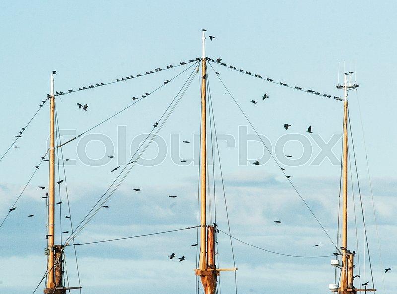 Birds on ship master.