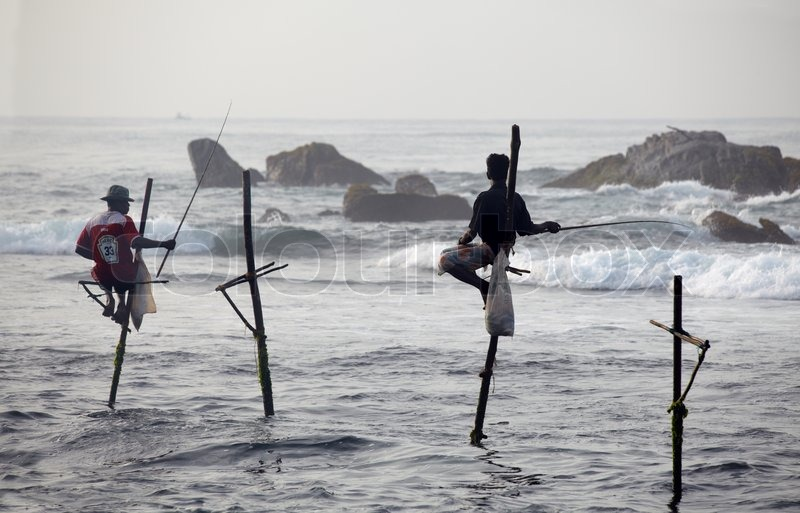 Sri Lanka, south coast - January 05 2011: traditional sri lankan pole fishermans fish in the ...