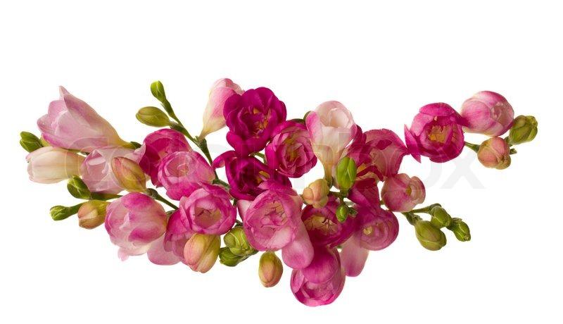 Pink freesias stock photo colourbox pink freesias stock photo mightylinksfo