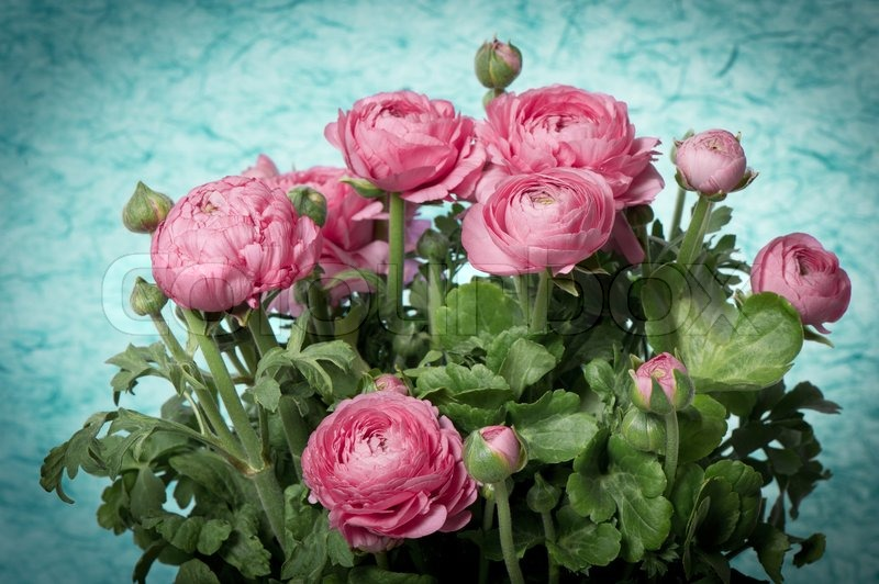 Beautiful bouquet of spring flowers pink ranunculus | Stock Photo ...