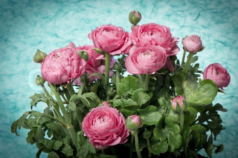 sch nen bouquet von fr hlingsblumen rosa ranunkeln stockfoto colourbox. Black Bedroom Furniture Sets. Home Design Ideas