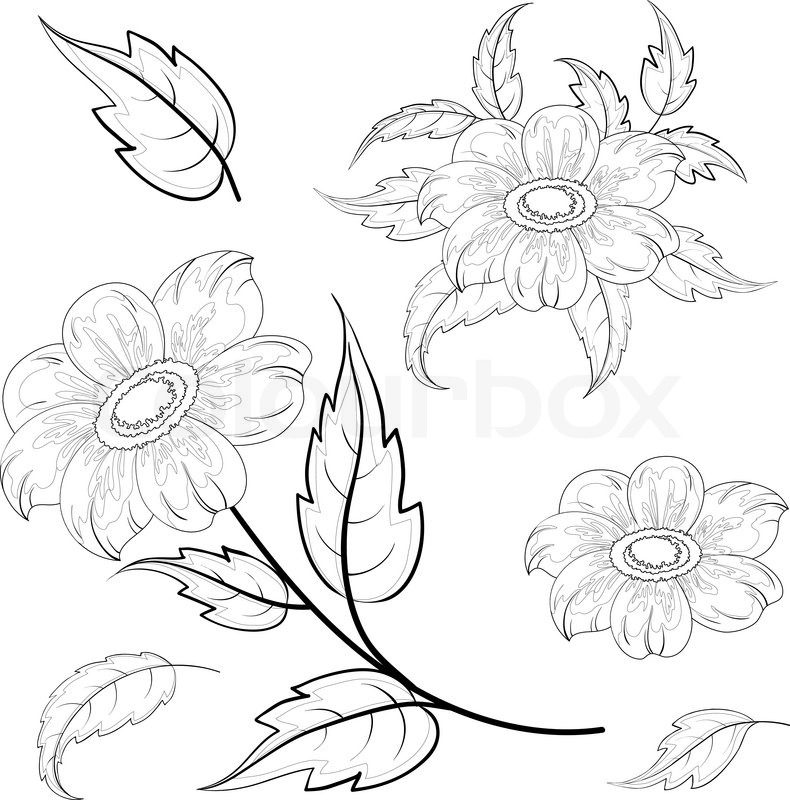 Contour Line Drawing Leaves : Flowers and leaves dahlia contours stock vector colourbox