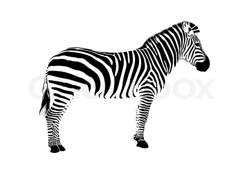 zebra silhouette vector colourbox zebra vector print zebra vector art