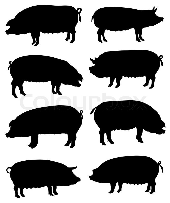 Collection of silhouettes of pigs   Stock Vector   Colourbox