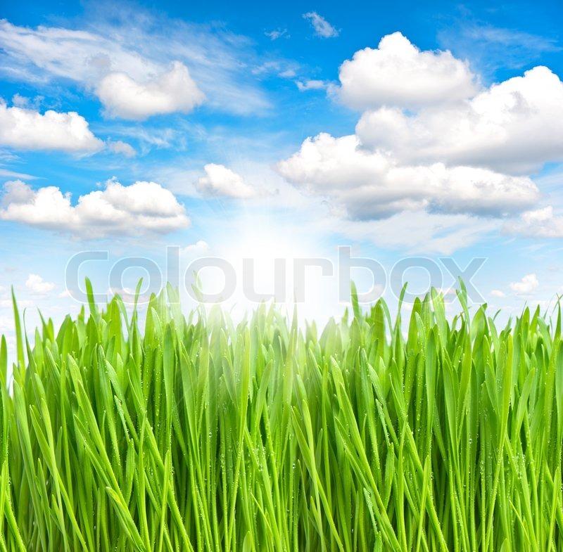gr nes gras mit wasser tropfen ber sonnigen blauen himmel. Black Bedroom Furniture Sets. Home Design Ideas