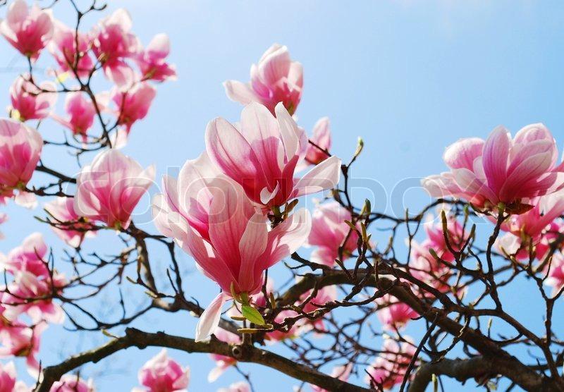 Blühende Bäume | Stockfotos kaufen | Colourbox