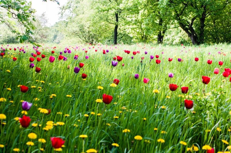 A beautiful meadow with trees and blooming tulips in the for Pretty grass