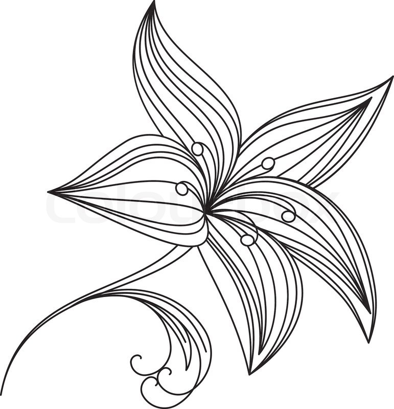 Chocolate Lily Drawing Abstract Beautiful Flower of