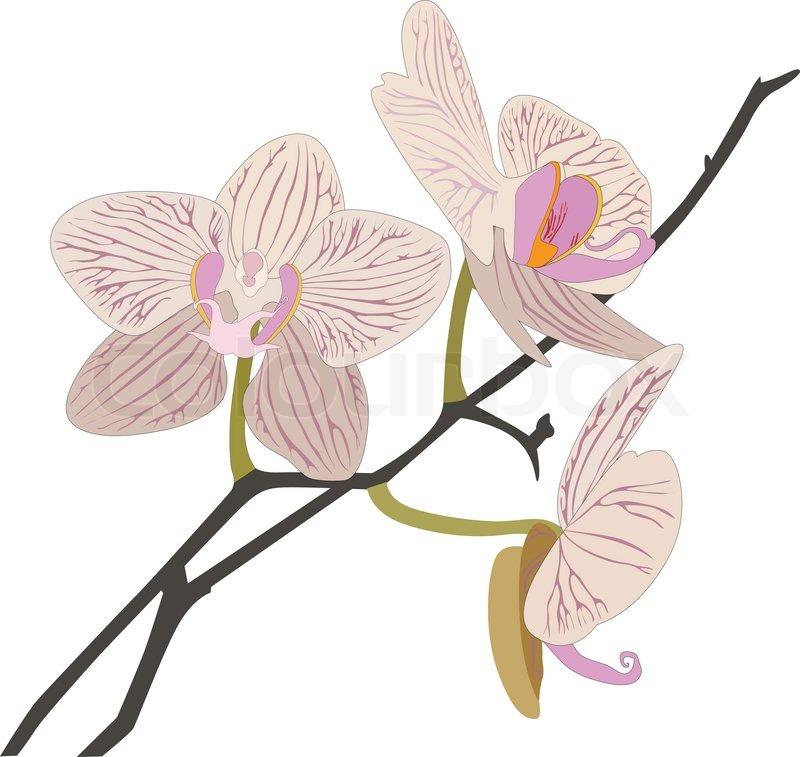 prostituierte preise orchidee zeichnung schwarz weiß
