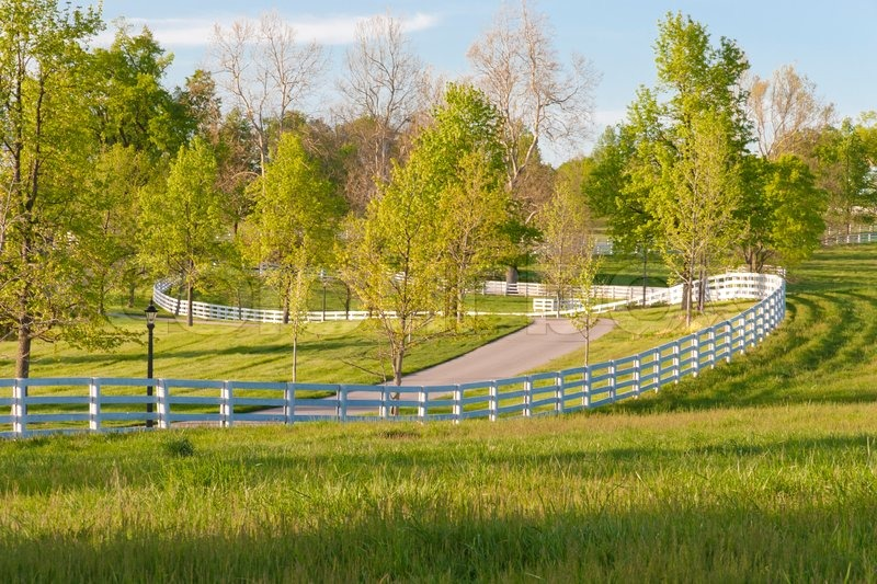 Country Scenery Green Pastures Of Horse Farms Stock Photo