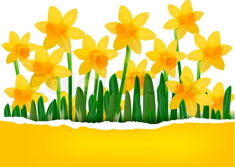 http://www.colourbox.com/preview/3882623-141561-yellow-spring-flower-background-with-ripped-paper.jpg