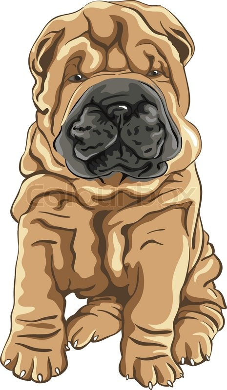Vector cute red Shar Pei dog puppy ... | Stock vector ...
