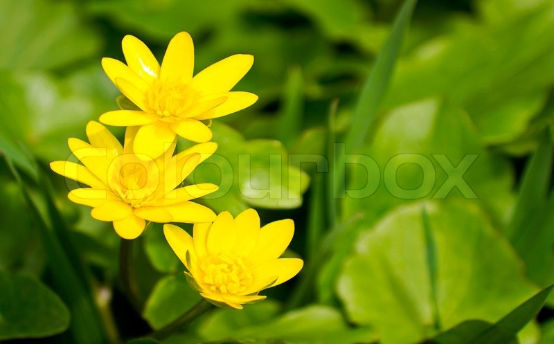 Yellow flowers on a green background stock photo colourbox mightylinksfo