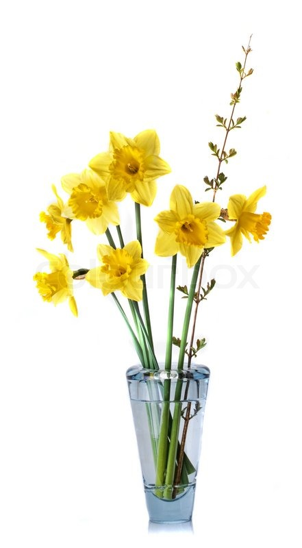 Yellow Daffodils In A Vase Stock Photo Colourbox