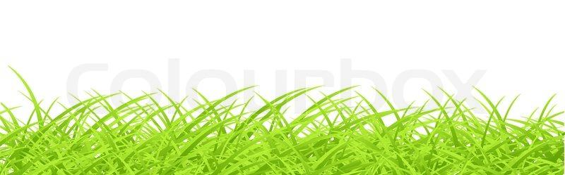 Vector grass design template   Stock Vector   Colourbox