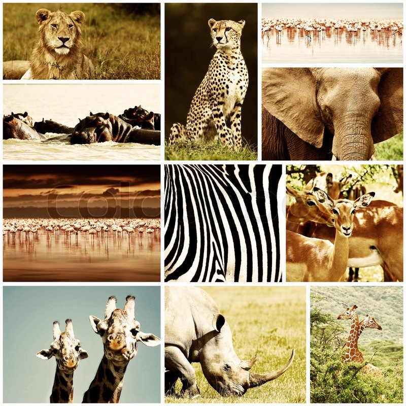 African Wild Animals Safari Collage Large Group Of Fauna Diversity