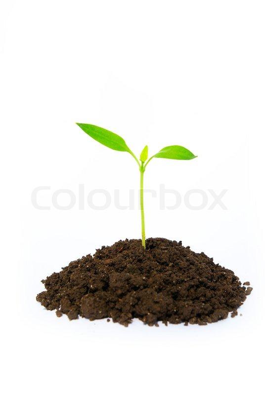 little green plant stock photo colourbox. Black Bedroom Furniture Sets. Home Design Ideas