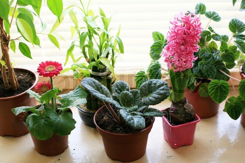 Комнатные нецветущие растения уход 69