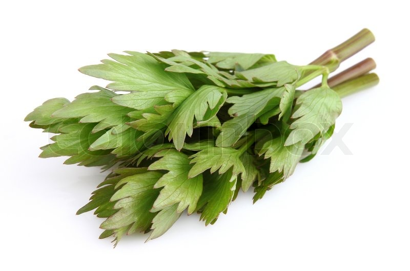 Stock image of 'Fresh lovage'