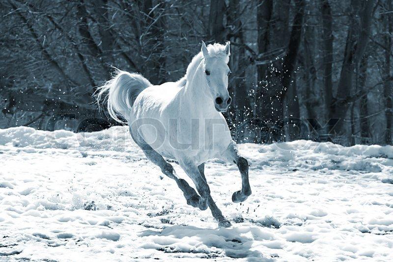 Skipping White Horse Stock Image Colourbox
