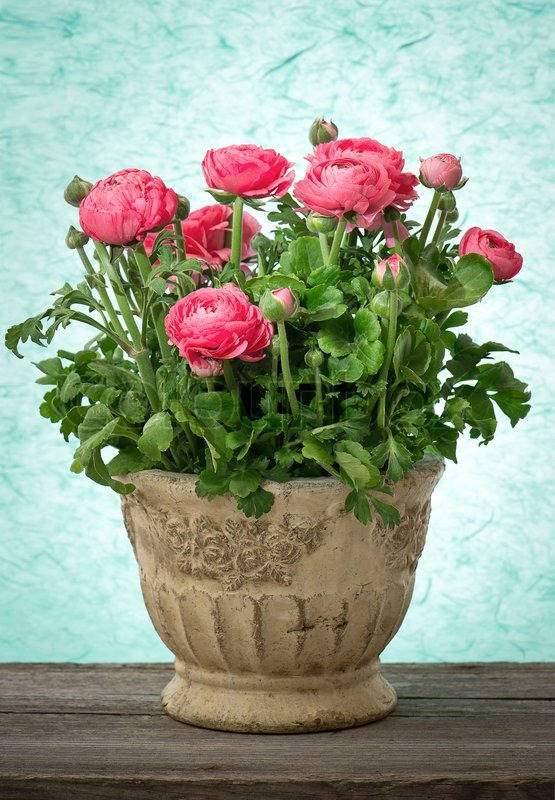 Bouquet of spring flowers pink ranunculus   Stock Photo   Colourbox