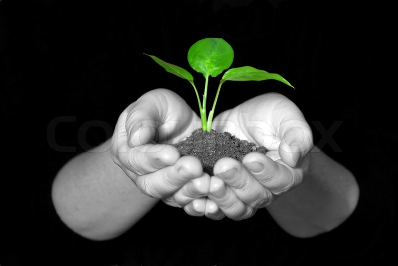 Stock image of 'Plant in hands'