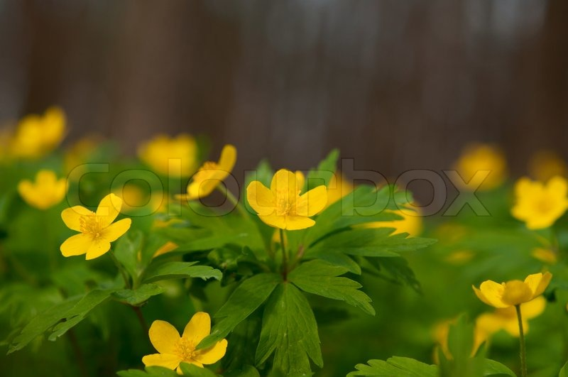 Yellow Wild Flowers Stock Photo Colourbox