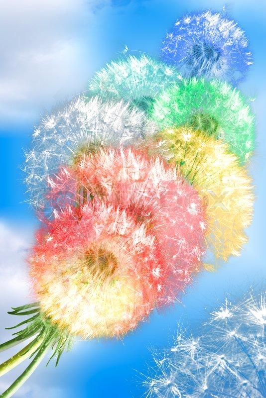 Dandelion flowers on blue sky background stock photo colourbox