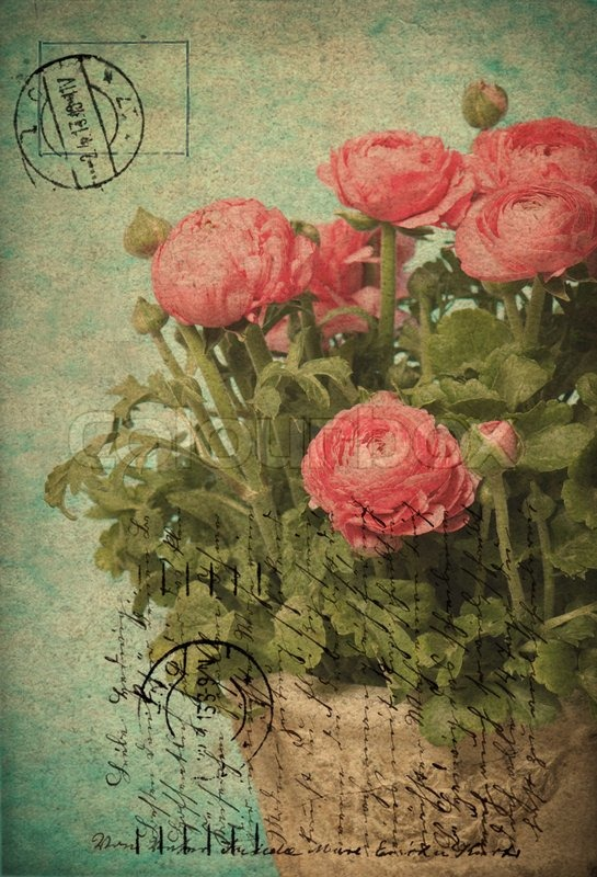 Pink Ranunculus Flowers Old Fashioned Card Design Stock