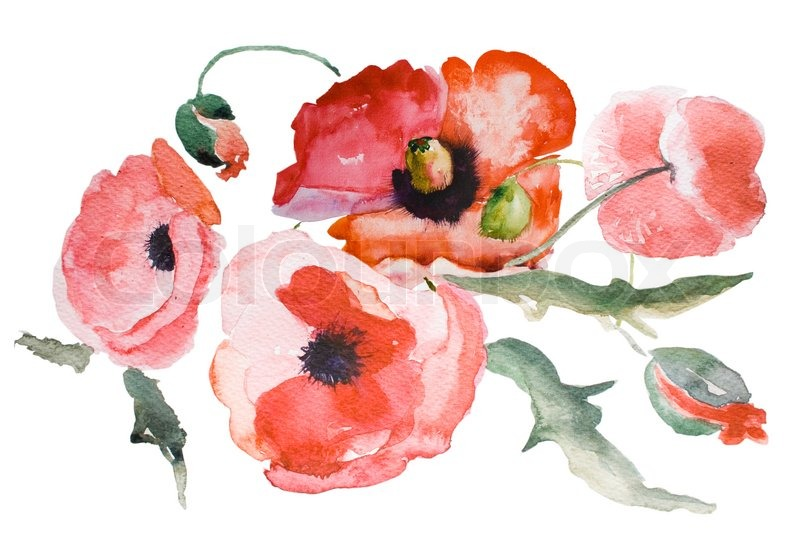 Watercolor Poppy flower | Stock Photo | Colourbox