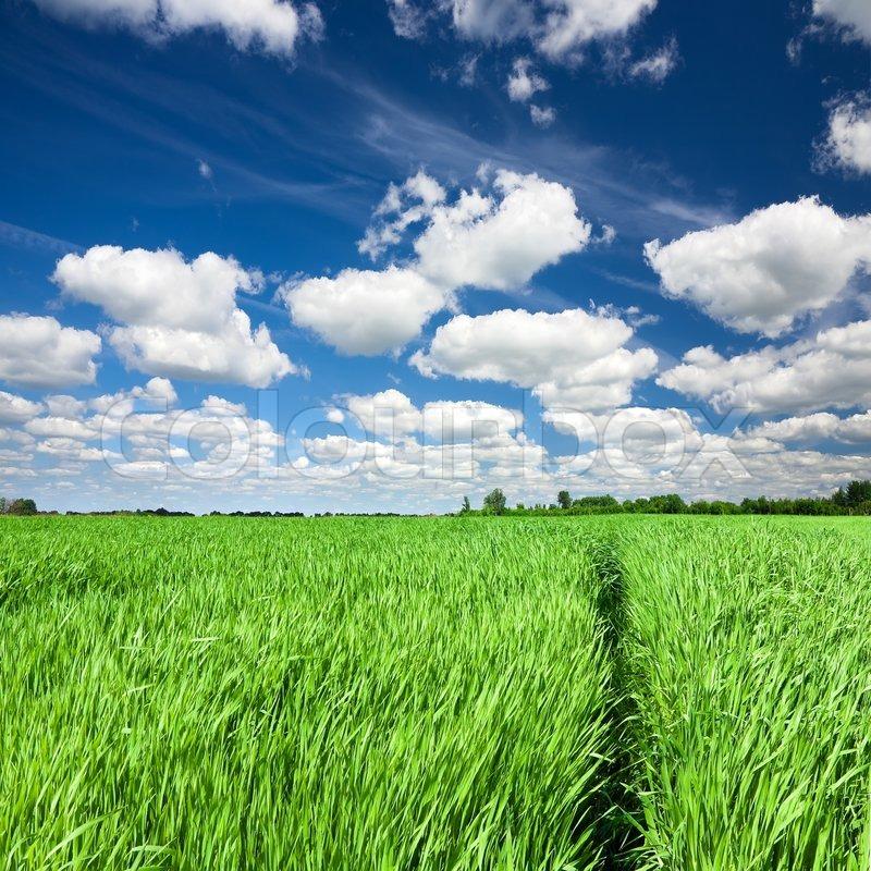 tall green grass field. Stock Image Of \u0027Trail Through Green Field In Tall Grass\u0027 Grass D