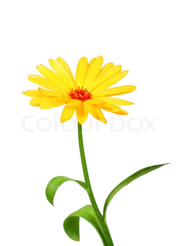 Image result for one flower