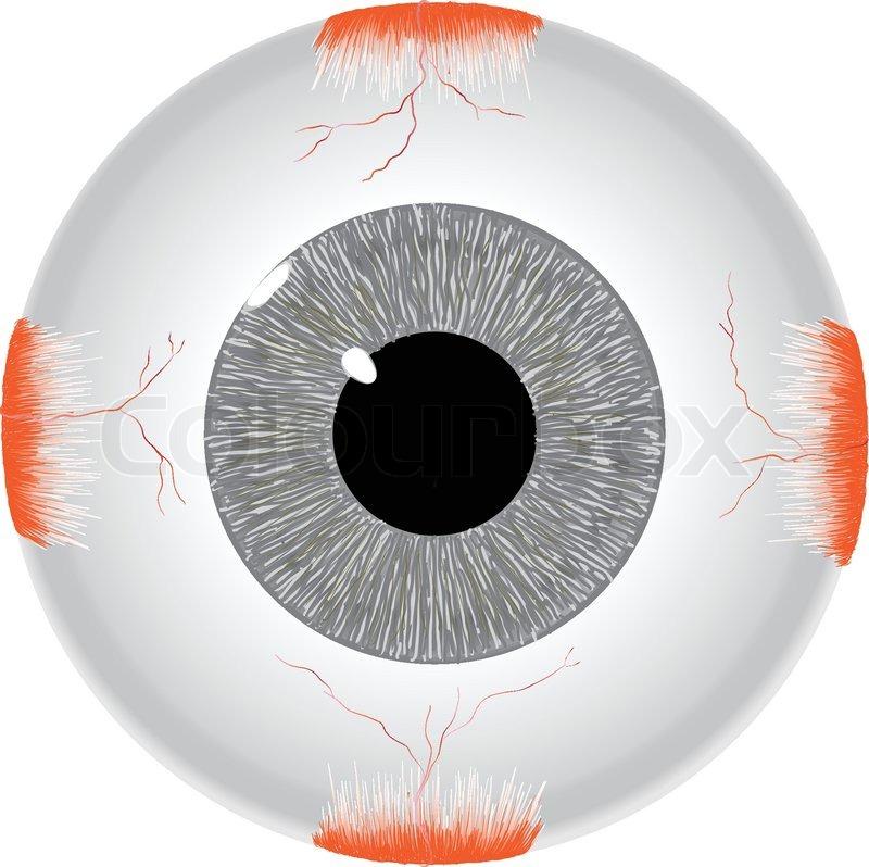 Das menschliche Auge | Vektorgrafik | Colourbox