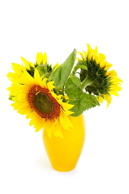 Three Sunflowers In A Yellow Vase Isolated On White Stock Photo