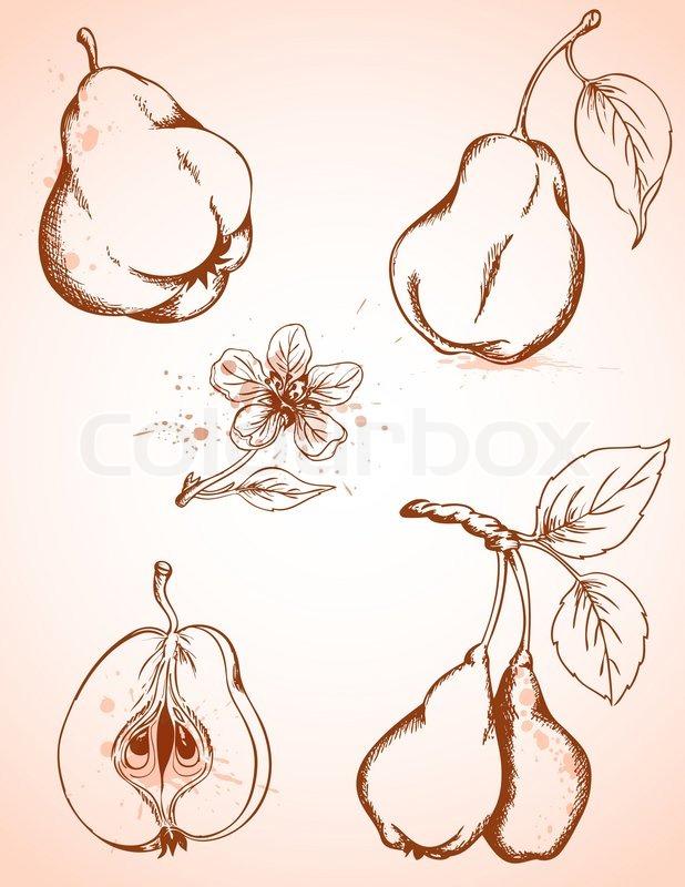 Vintage Pears 33