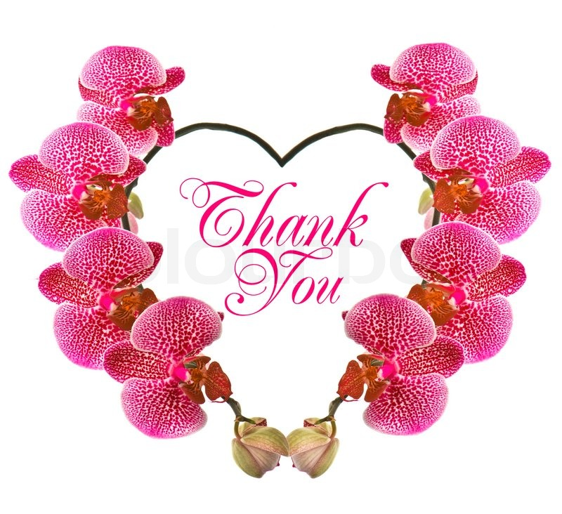 Beautiful orchid flower in heart shape | Stock Photo | Colourbox
